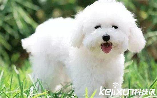 近日保护动物协会发出一份世界上最萌宠物大盘点