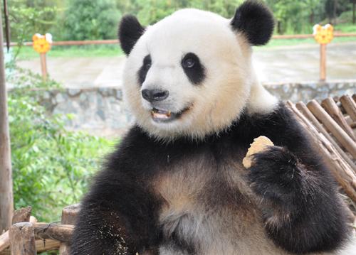 云南野生动物园邀请市民拍摄阳光思嘉