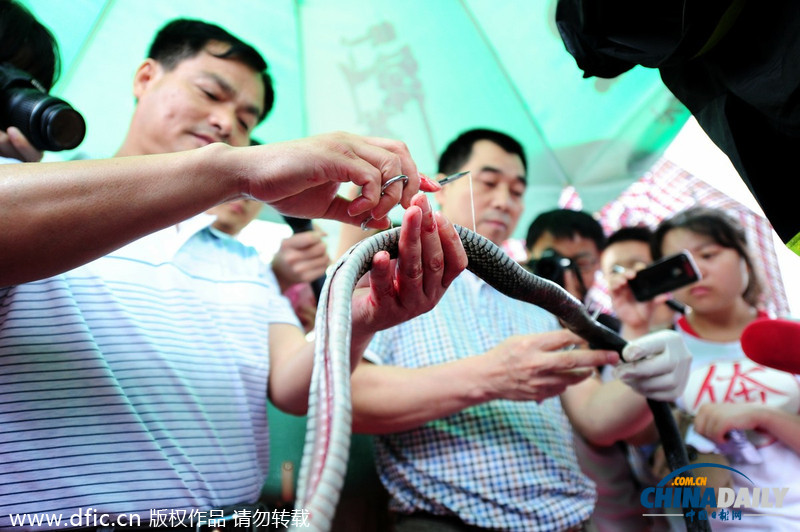 长沙街头现场解剖活蛇 拒食野生动物