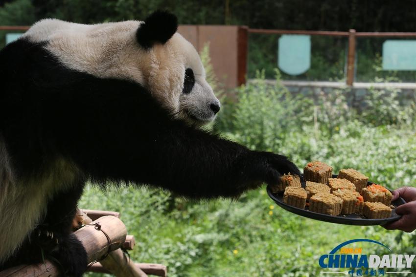 云南野生动物园动物过中秋[1]- 中国日报网