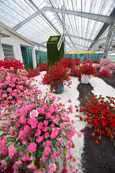青州花卉博览交易会展出的美丽鲜花.鞠川江 摄-第14届中国 青州 花卉