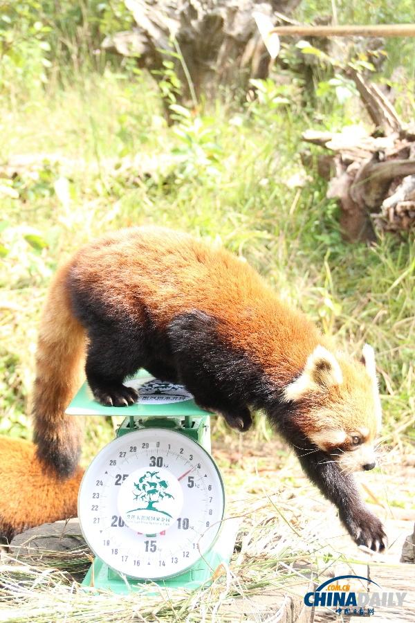 动物总动员开奖结果_福彩动物总动员_野生动物总动员