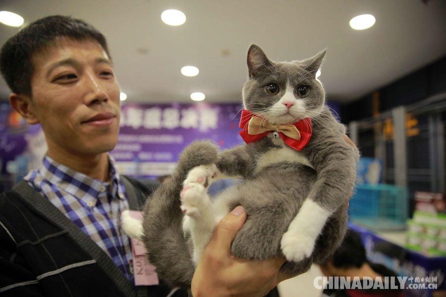 北京由北京市保护小动物协会爱猫分