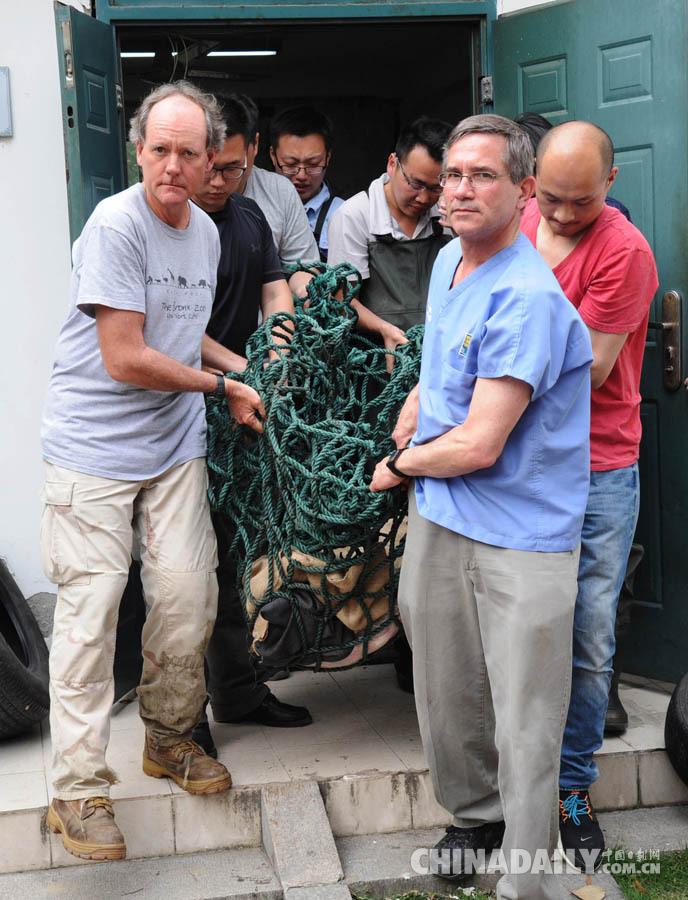 2015年5月6日,由WCS(国际野生生物保护学会)、TSA(国际龟鳖生存联盟)与中国动物学会合作,对苏州动物园内我国仅剩的一对百岁斑鳖情侣进行首次人工授精获得成功,将作为人类拯救地球最大淡水鳖的最后希望。 据了解,2008年5月,长沙斑鳖姑娘远嫁苏州,与苏州动物园一只雄性斑鳖联姻,共同承担起繁衍后代的重任。年过6年这对夫妻始终还是没有传来好消息。苏州动物园饲养员称,80多岁雌鳖到苏州6年来年均产下100枚卵,但经国际组织多次抽取的数十枚卵做检测,未发现受精卵。经专家分析其原因可能已是100多岁