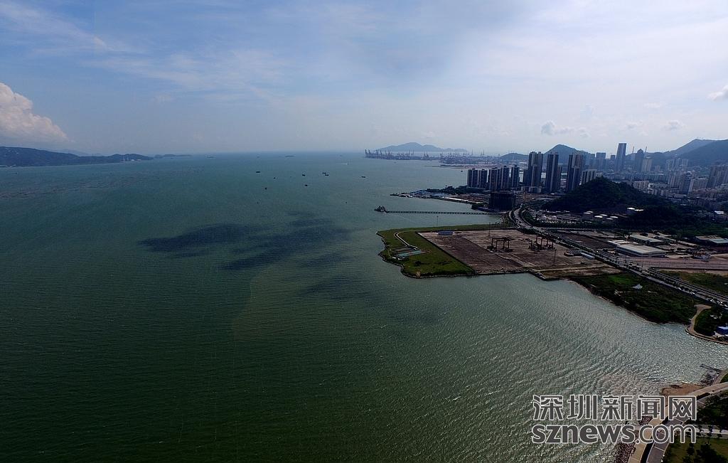 无人机航拍深圳湾 离红树林越近