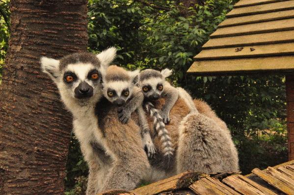 云南野生动物园邀请市民帮野生动物写春联
