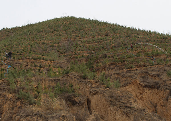甘肃平凉市:崆峒区春季植树造林正忙时图片