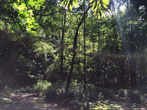 宝台山国家森林公园内的野生蘑菇 宝台山国家森林公园位于云南省大理州永平县宝台山,公园东南西三面与金光寺自然保护区试验区相接。境内最高海拔2913米,最低海拔1150米,气候垂直变化明显。森林植被具有从滇南到滇西北过渡的显著特征,保存着一批珍惜物种,是省内难得的物种基因库。2015年12月23日,国家林业局正式批准设立宝台山为云南宝台山国家级森林公园。(中国日报云南记者站)  宝台山国家森林公园植被