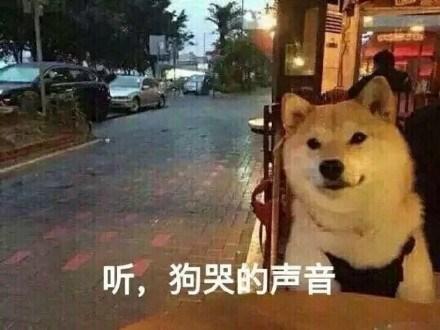 斗图表情包:情人节到了 你依旧还是一只孤独的单身狗