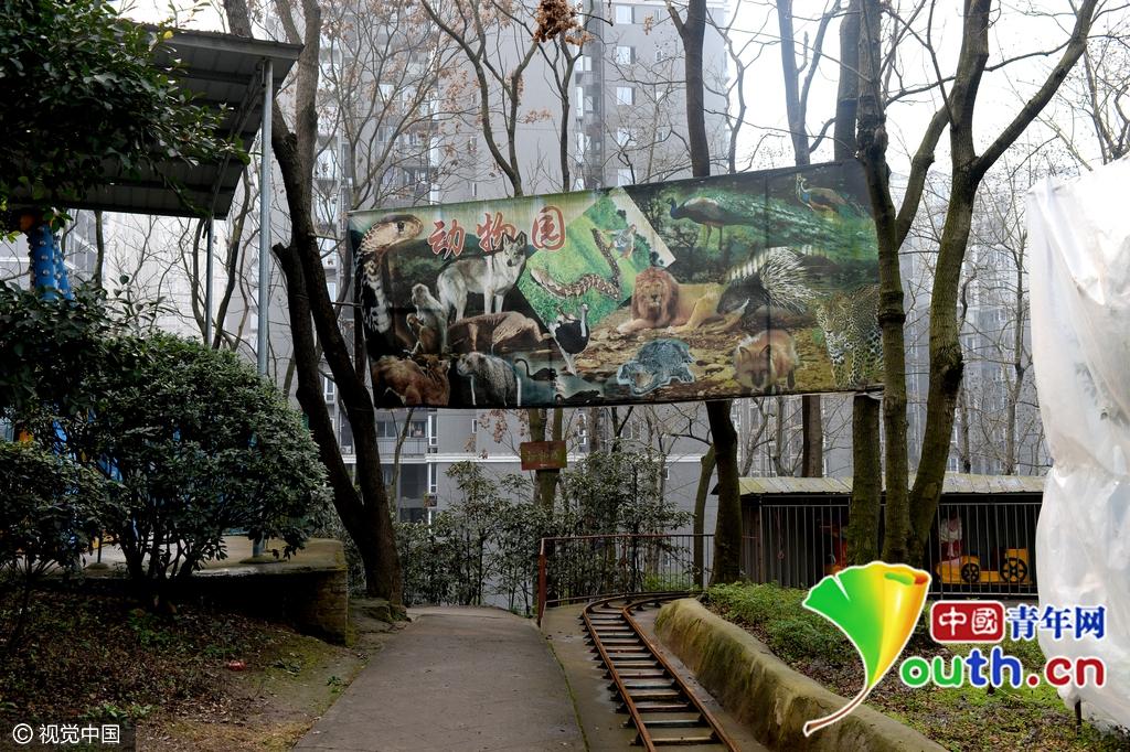 """重庆现""""袖珍动物园"""" 生存环境恶劣动物生无可恋图片"""