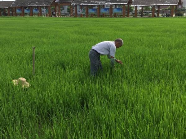 """【双绿报道】""""双绿""""之湖北仙桃富硒产业·绿色种植"""