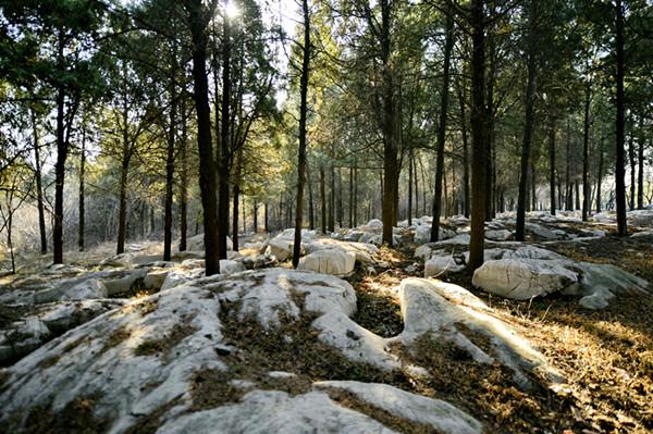 【中国梦·实践者】山东原山:60年打造的绿色丰碑
