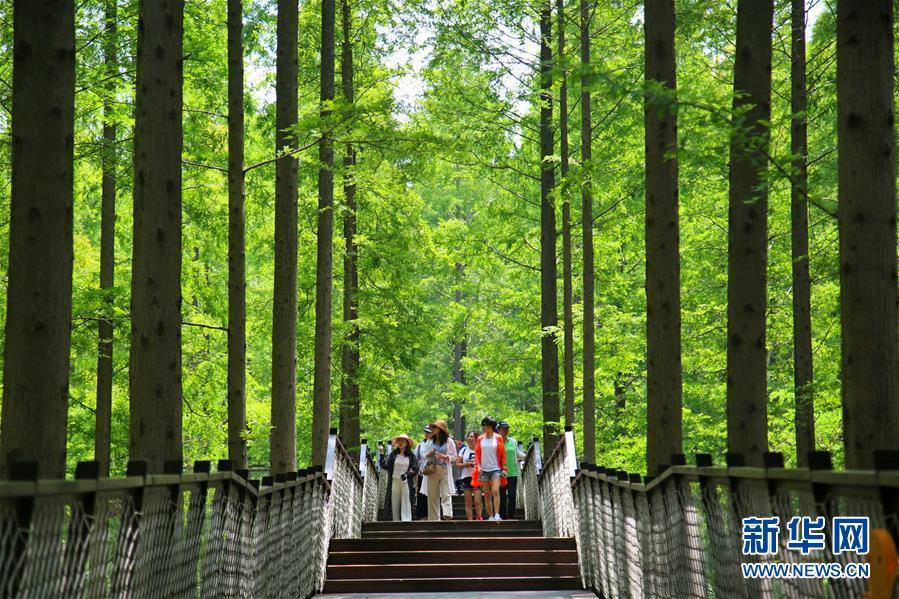 7月21日,游客在黄海国家森林公园游览. 新华社发(陈暐 摄)