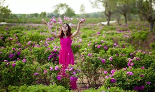 宁夏金沙岛首届玫瑰节拉开序幕