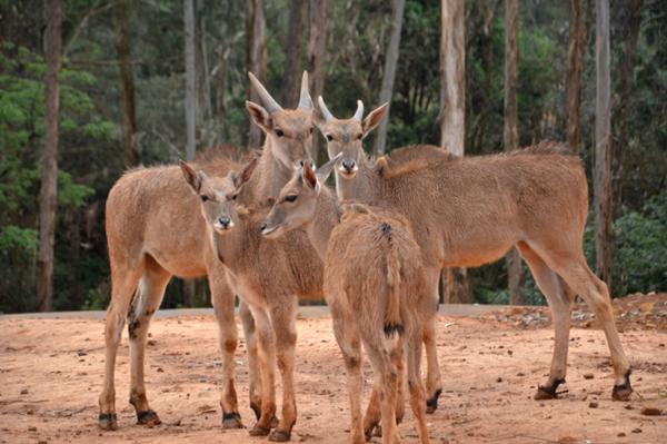 云南野生动物园非洲部落萌星节周末开启 儿童免费入园