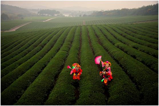 目前该风景区是江苏省乃至国内最为著名的休闲旅游胜地之一.