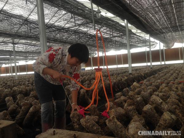中节能(乐平)光伏——高科技光伏产业引领绿色农业崛起