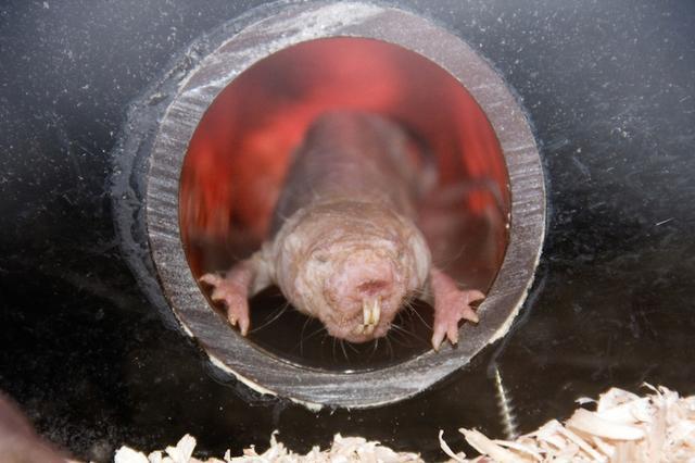 常年生活在地下,是一种吃腐蚀性食物的动物